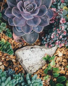 Succulents How to grow succulents