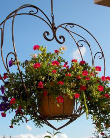 Heart shaped hanging baskets