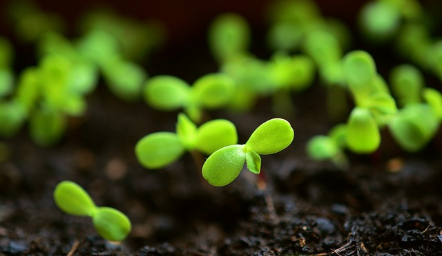 Tiny seedlings growing in compost, 6 Best Seed propagators review