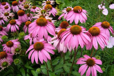 What jobs to do in the garden in September