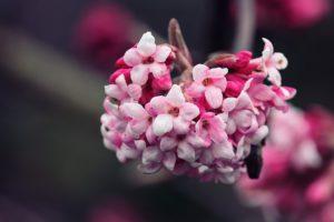https://PlantsBulbsSeeds.com