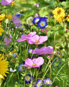 Wildflower Garden Ideas