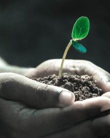 What is the best soil for plants? Hands holding soil with a seedling growing in it.