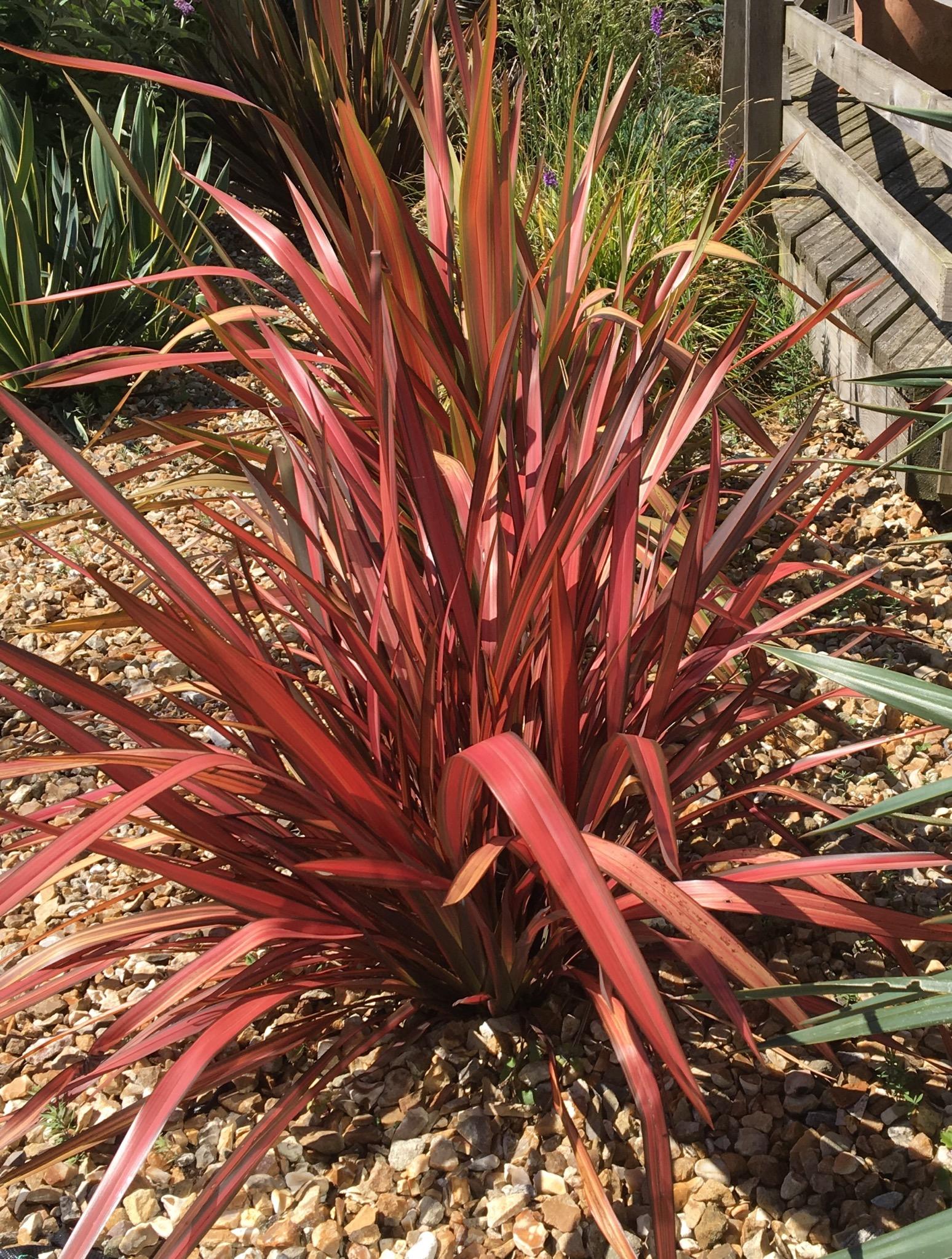 Flowering Plants for Full Sun | Plants Bulbs Seeds