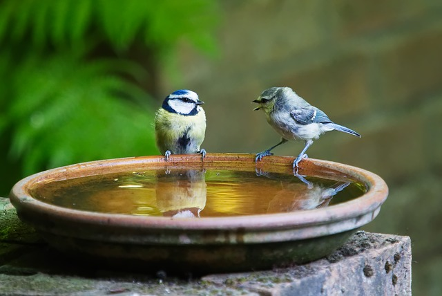 Keep bird baths topped up with clean water