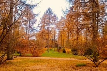 Shows autumn foliage trees