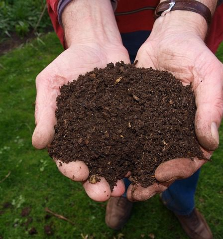 How to make compost for the garden, shows a handful of compost