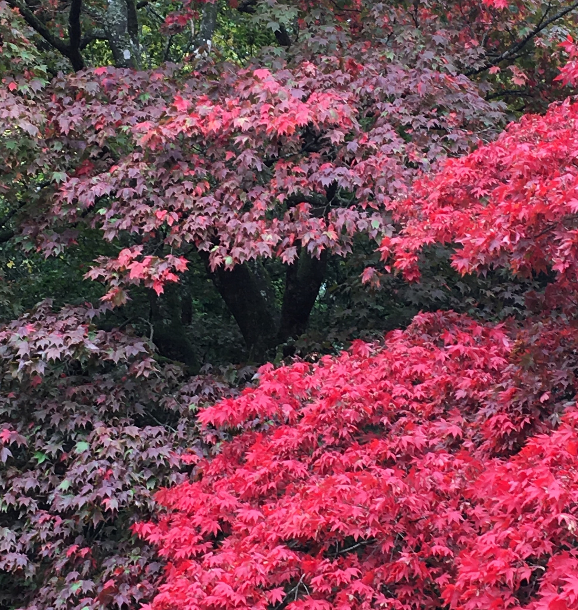 Best Plants ForAutumn Colour Red and pink autumnal foliage on acers