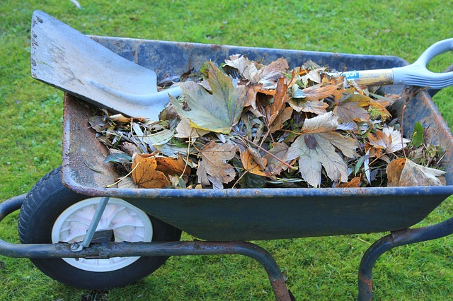 Wheelbarrow full of autumn leaves