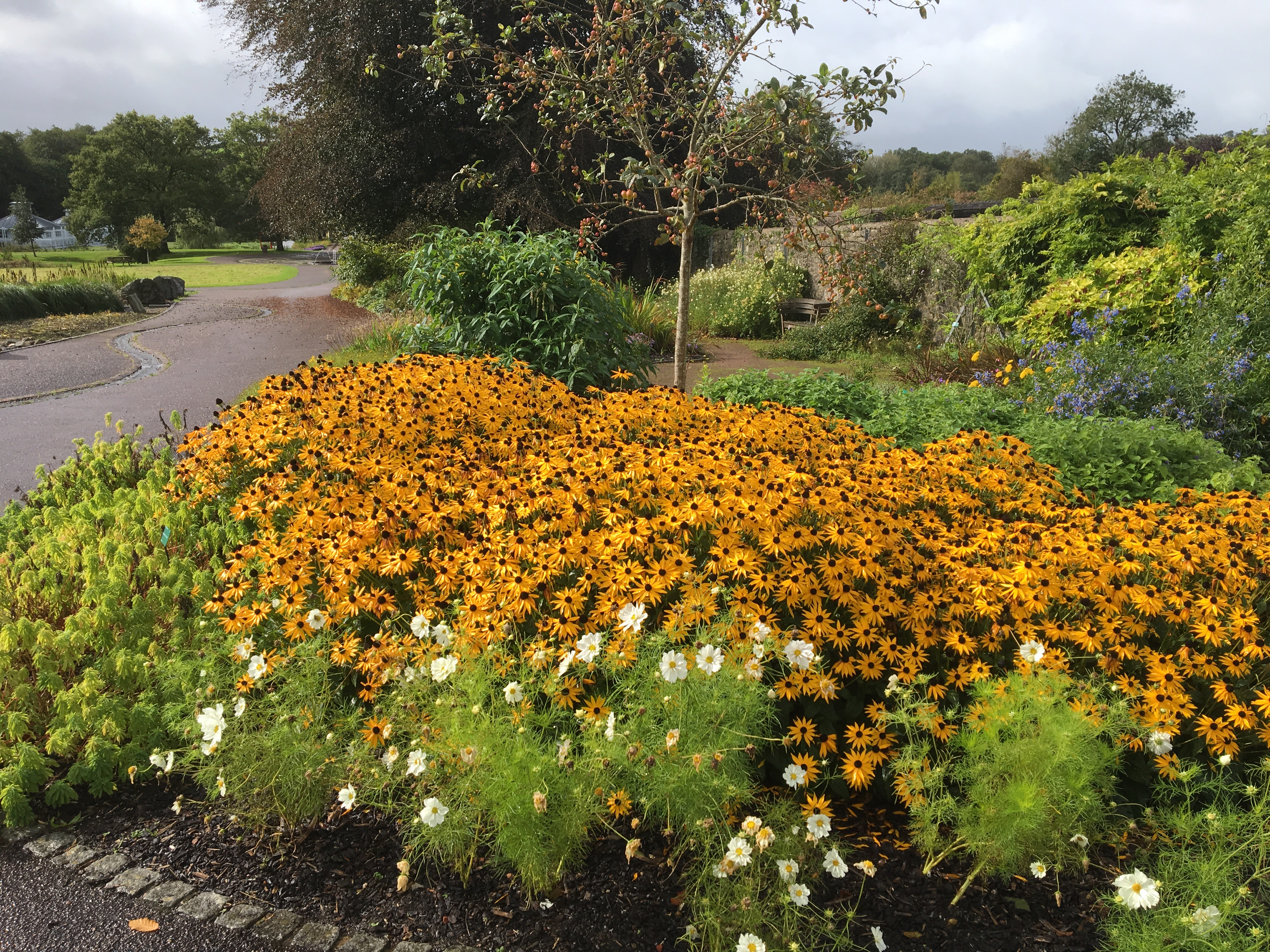 Large flower beds with rudbeckia and Japanese anenome