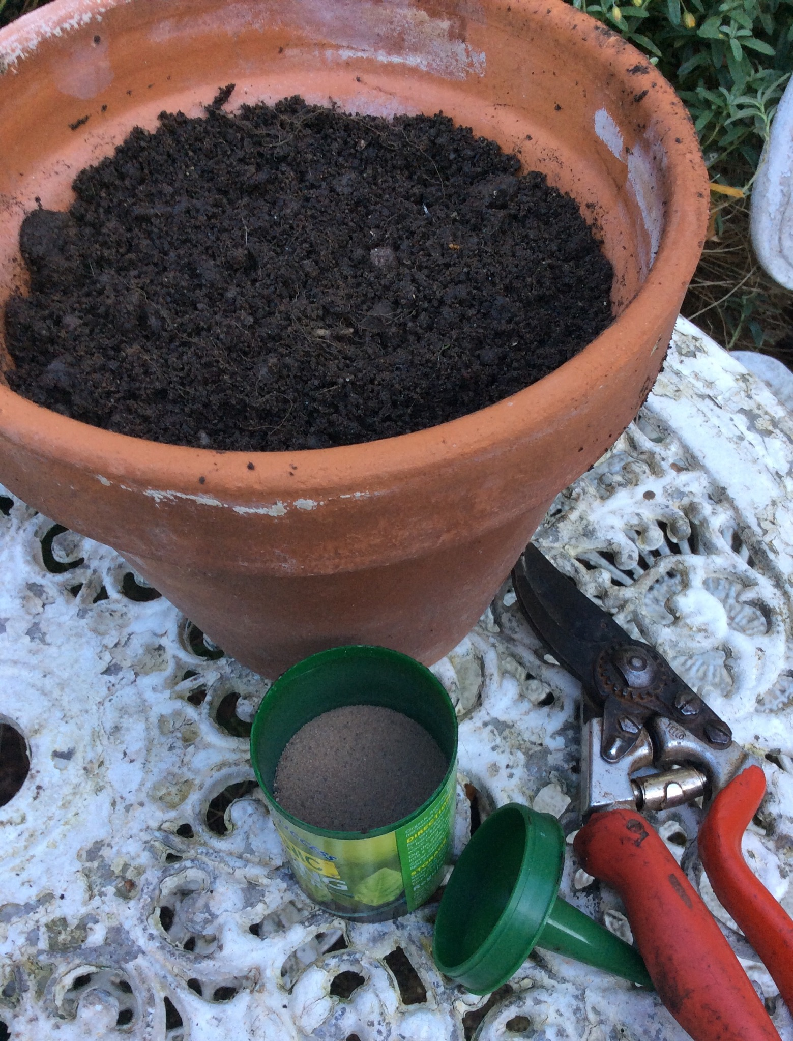 Hardwood Cuttings Technique. Pot of compost, secateurs and rooting powder, hardwood cuttings technique