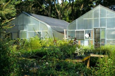 Two greenhouses with winter protection