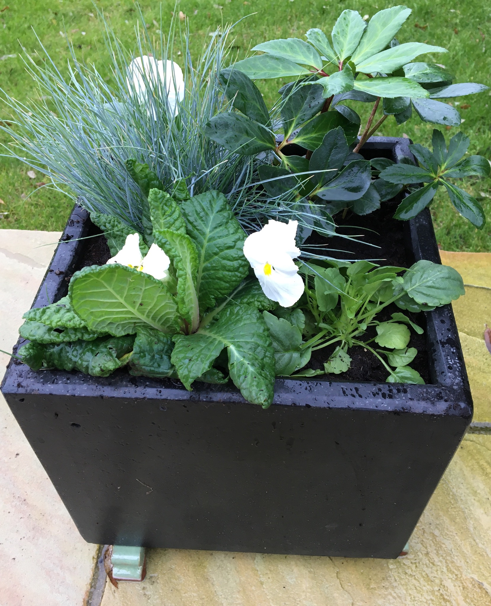 White flowers and green foliage plants in a square black patio planter