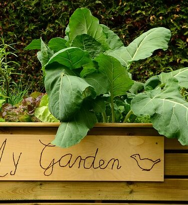 A wooden raised bed kit with vegetables