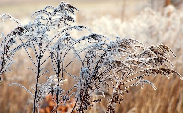 Grass seed heads with frost What jobs to do in the garden in January