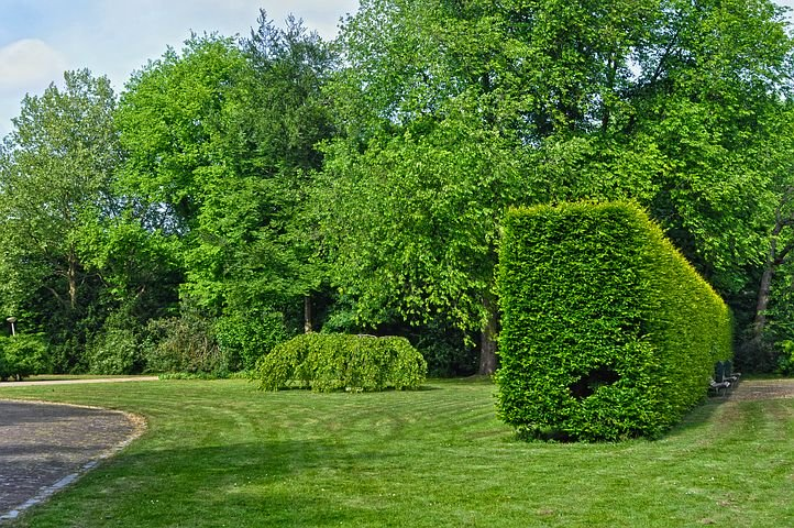 Evergreen windbreak shrubs and trees