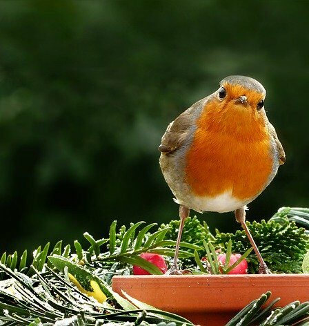 What Jobs To Do In The Garden In February. Robin sat on a terracotta bird feeder what jobs to doin the garden in February