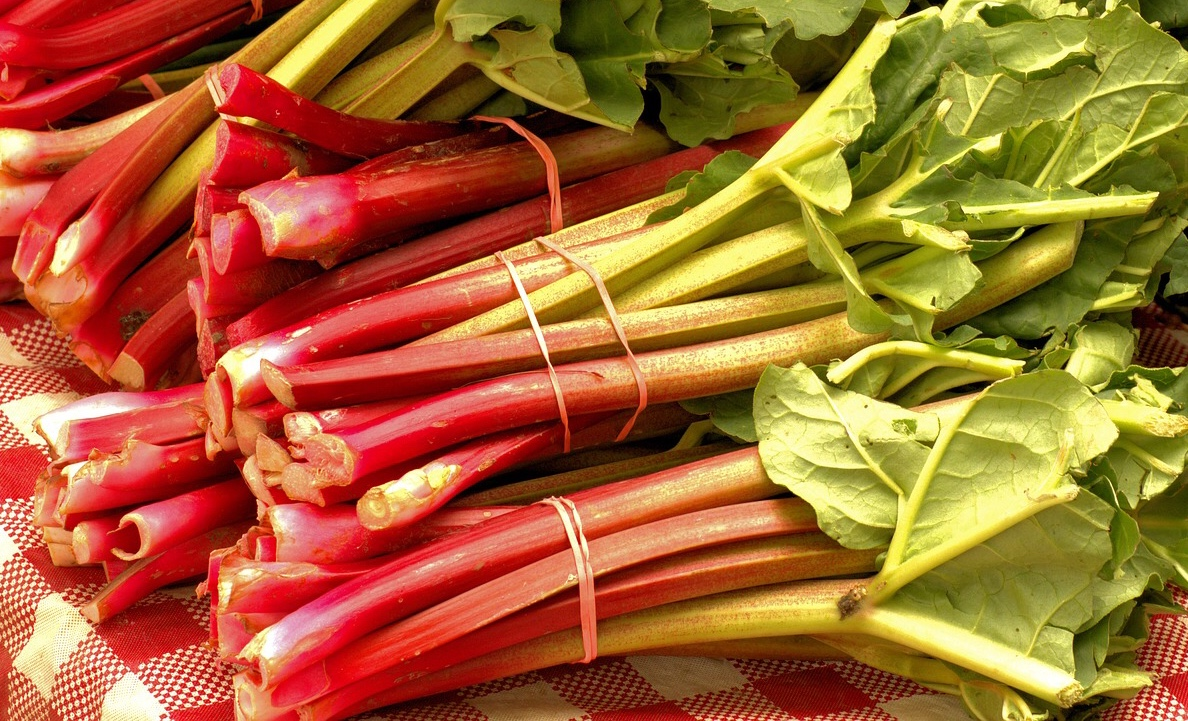 Bunches of Rhubarb Plants that like a shade garden
