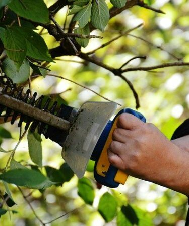 A man using a cordless hedge trimmer . Best cordless hedge trimmer reviews