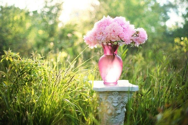 Bouquet of pink peony in a pink glass vase. How to grow peonies