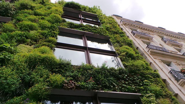 Living plant wall Best Plants to Combat Pollution In Your Garden