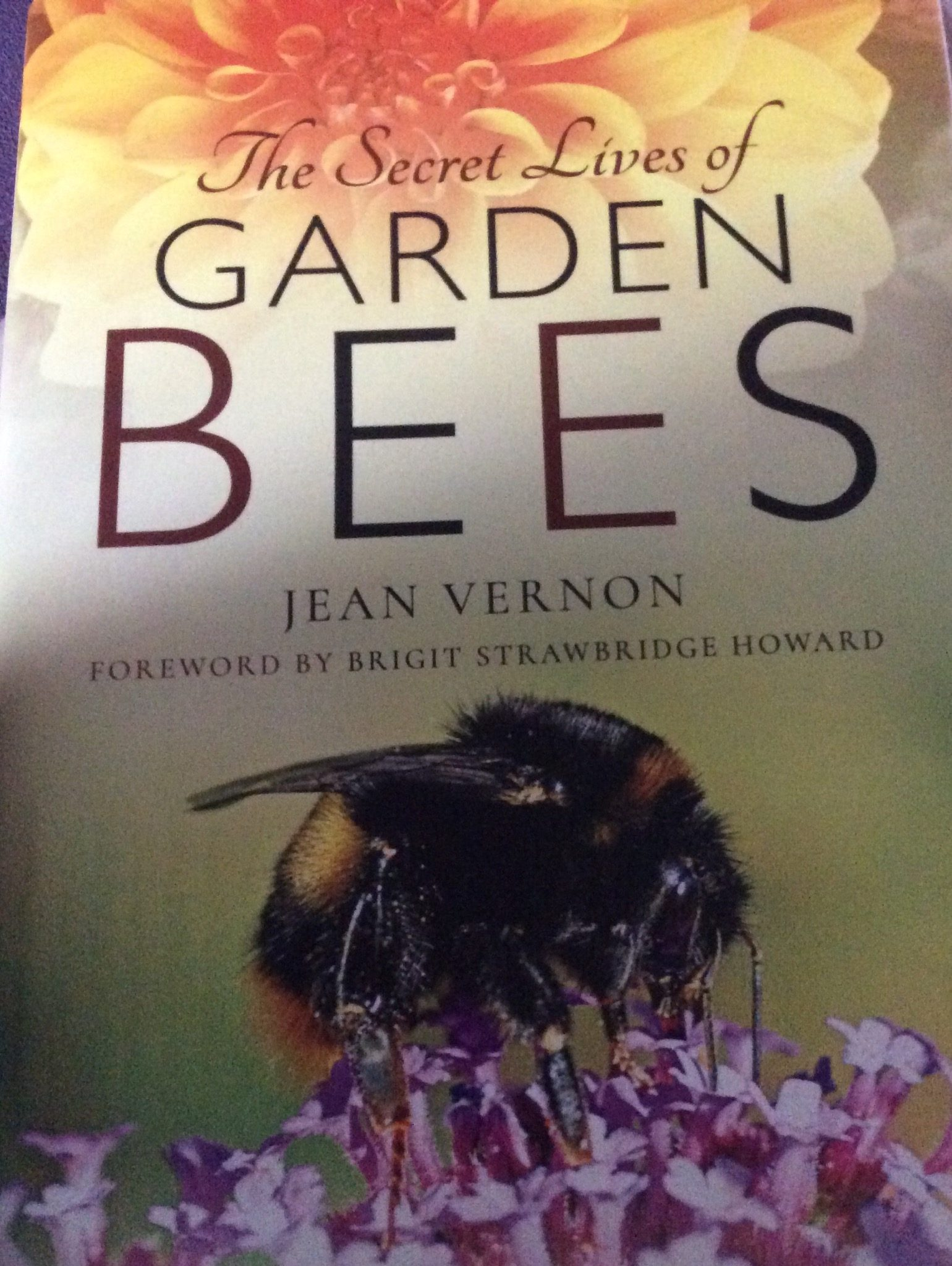 The Secret Lives Of Garden Bees Book front cover.