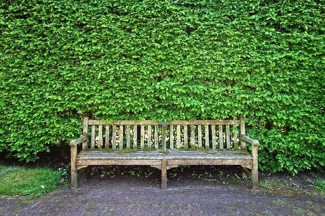 A deep, tall hedge with a wooden bench, Best Plants To combat pollution in your garden