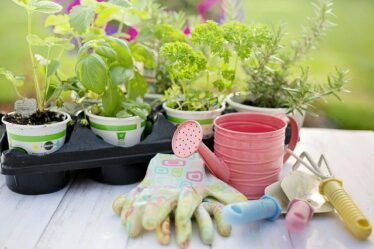 Watering can, gloves and garden hand tools. Essential garden tools for beginners.