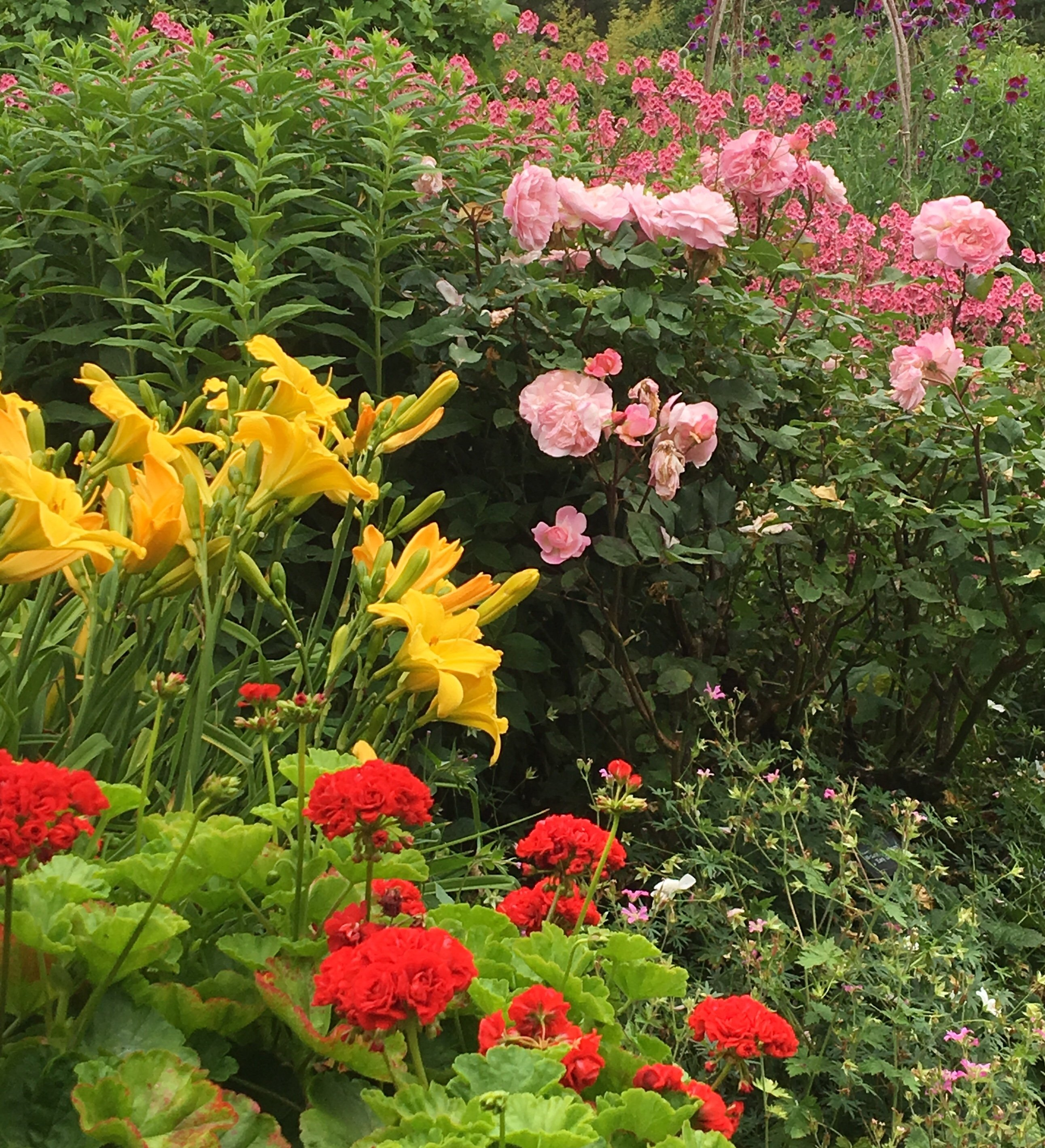 Yellow, red and pink perennial plants