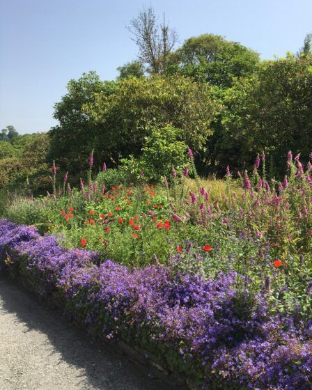 A garden border with campanula, poppies, grasses and foxgloves, how to plant a hardy perennial border
