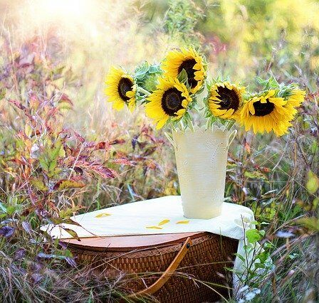 Sunflowers in a jug placed outdoors on a table. Cutting flowers garden plants