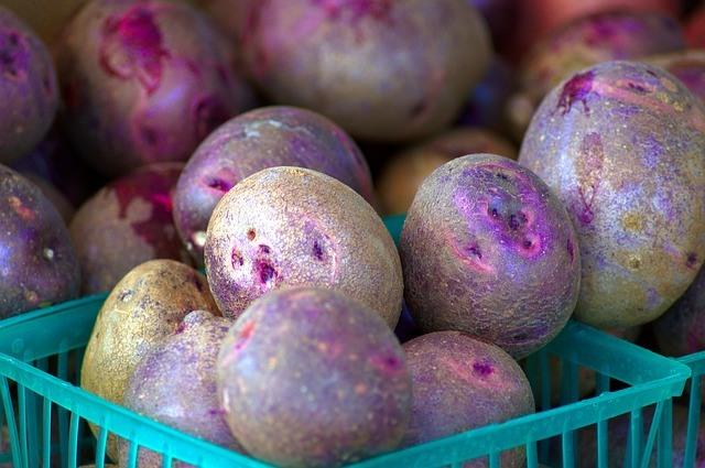 Purple heirloom potatoes