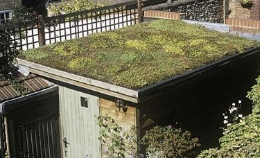 Green roof, plants on a shed roof, how to create a green roof on your garden shed