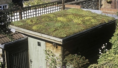 How To Create A Green roof on Your Garden Shed. plants on a shed roof, how to create a green roof on your garden shed