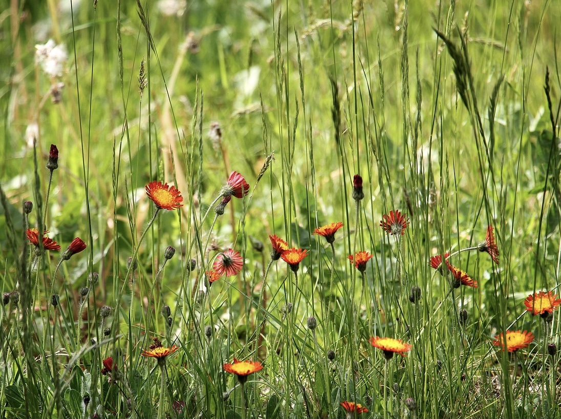 Top 7 Gardening Trends 2021. Wild flower meadow. Top 7 Gardening Trends 2021