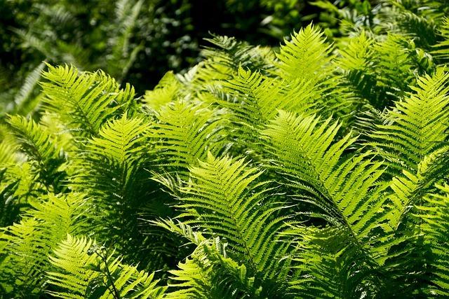 Ferns. Hardy Tropical Plants UK