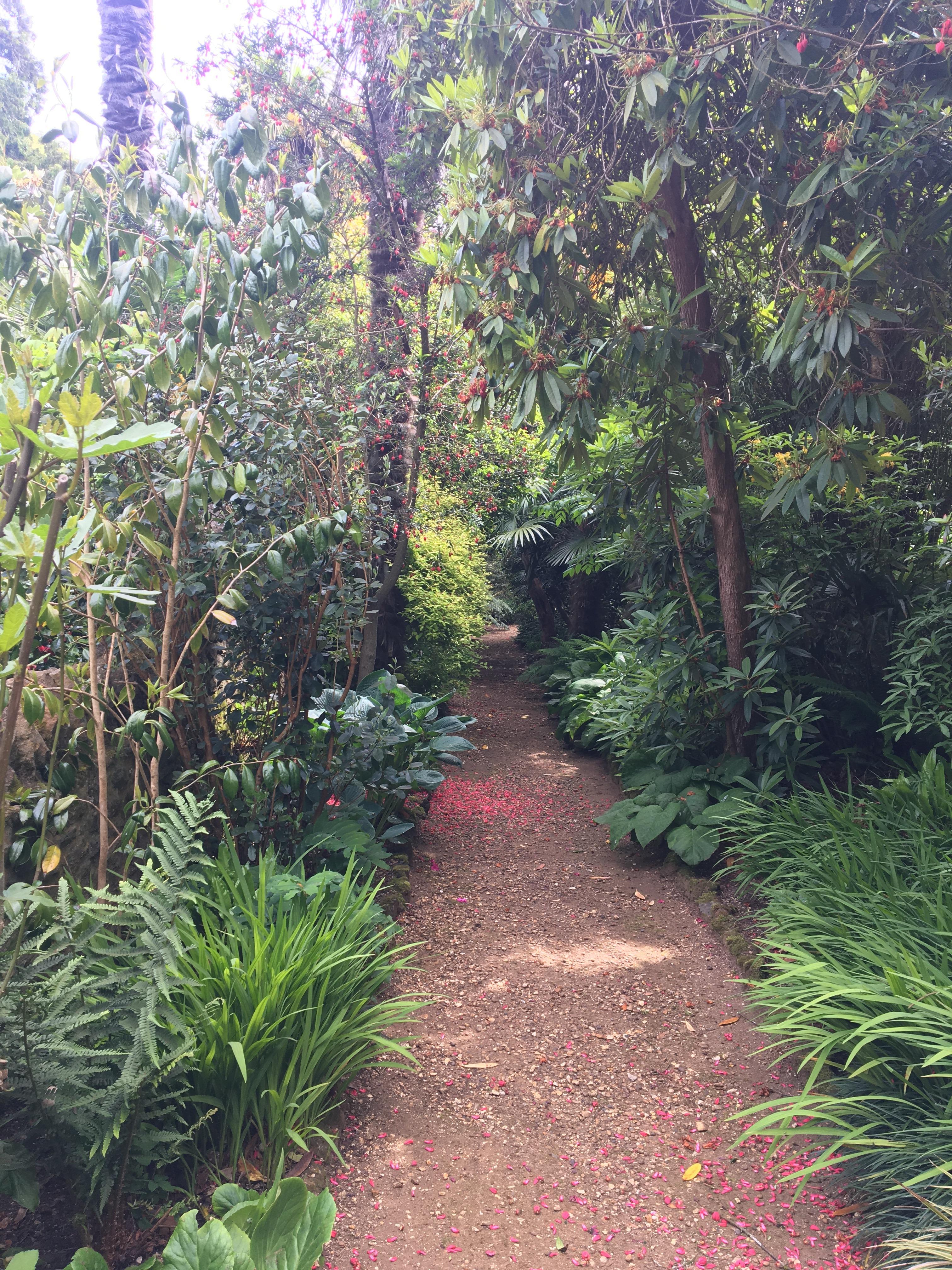 Trees, ferns, palm trees HArdy Tropical Plants UK