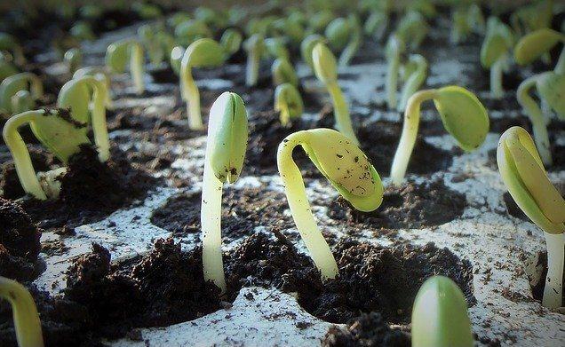 Seedlings. Lunar Gardening