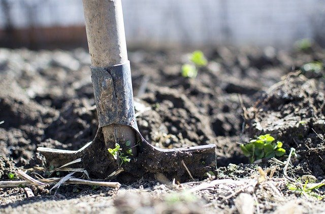 Best Plants For Growing In Chalky Soil, chalky soil image